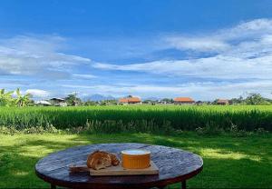 breakfast by paddy fields