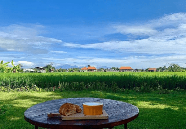 breakfast by paddy fields