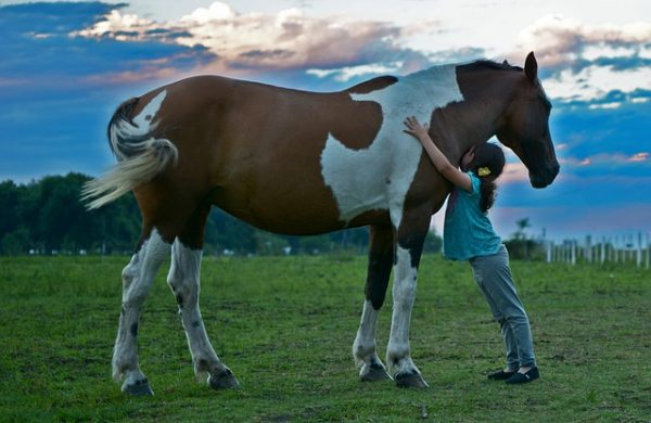 Horse riding Wanaka kids