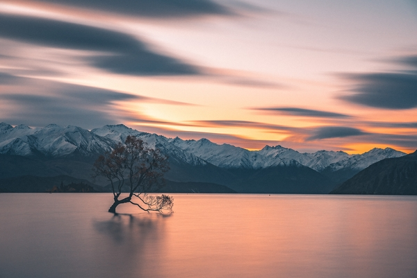 things to do in wanaka - Take a photo with #thatwanakatree