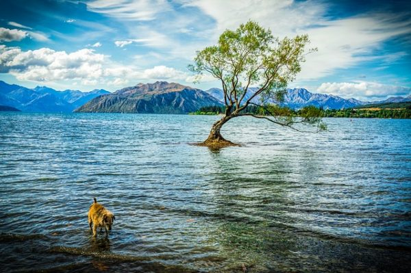 Wanaka with kids - family time at this beautiful Lake Wanaka