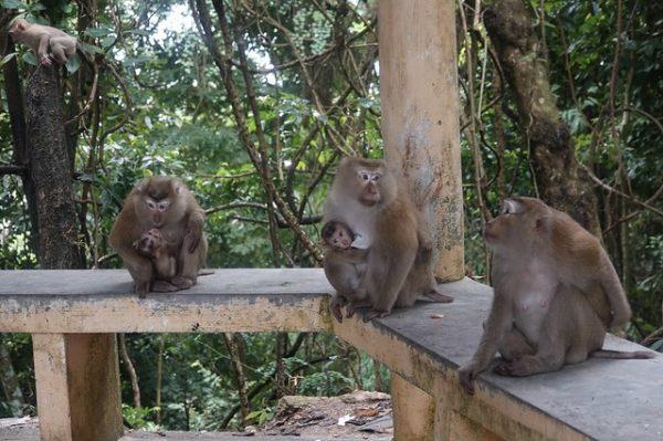 family activities Phuket