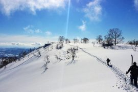 Niseko Ski Guide
