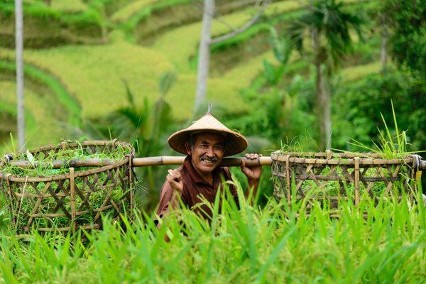 day trip to Ubud from Seminyak