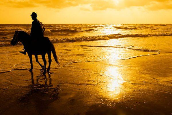 horseback riding in hua hin with kids